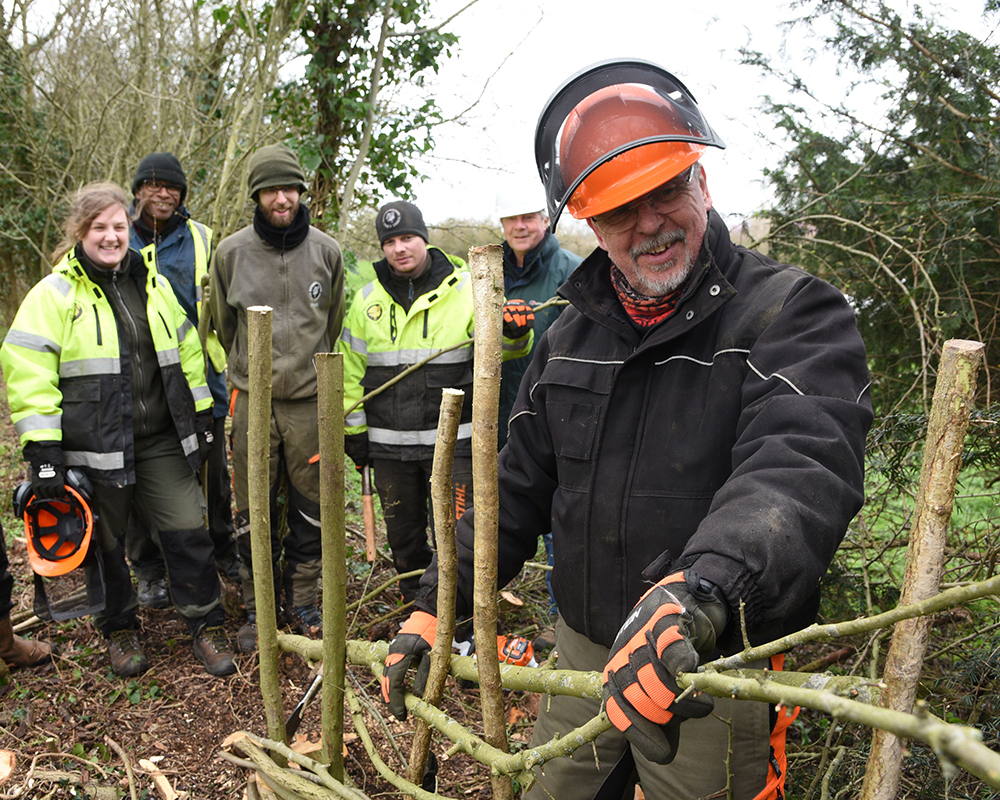 Teaching traditional hedgelaying skills at Priory Meadow