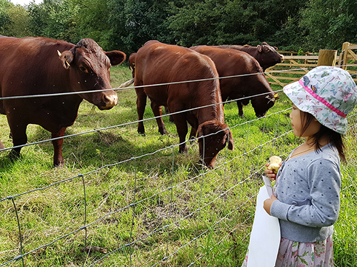 """Among those keen to see the cattle in their new home was this little girl, who came with her family to a """"Meet the Farmer"""" event."""