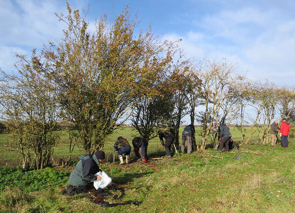 Volunteers get to grips with tree planting at Warwick Spinney. Photo credit: Benson Nature Group